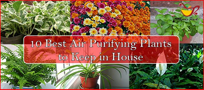 10 Best Air Purifying Plants For Healthier Air and Environment