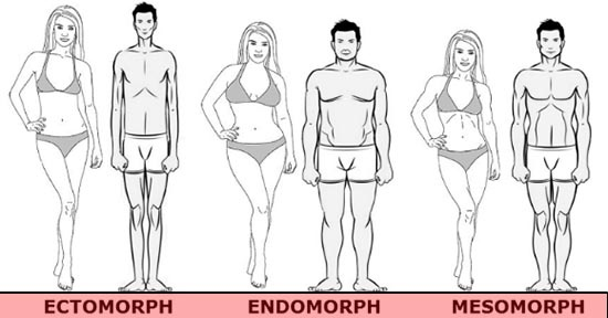Image Defining All Body Types