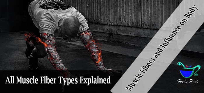 Muscle Fibers Explained Feature Image