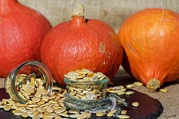 Pumpkin Seeds as Protein Rich Vegan Foods
