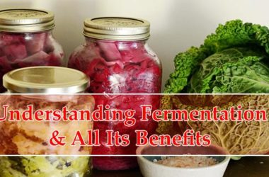 Benefits of Fermentation Cover Image